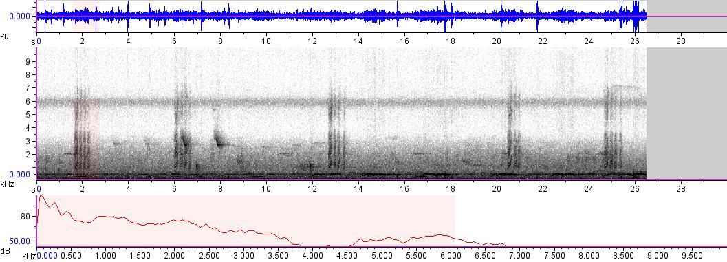 Sonogram of recording #AV 5665