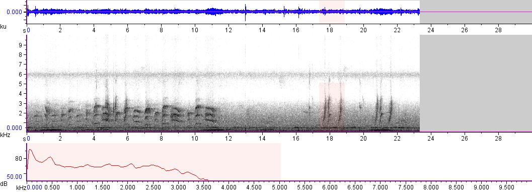 Sonogram of recording #AV 5666