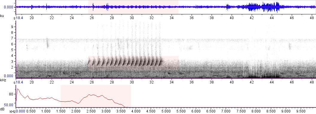 Sonogram of recording #AV 5667