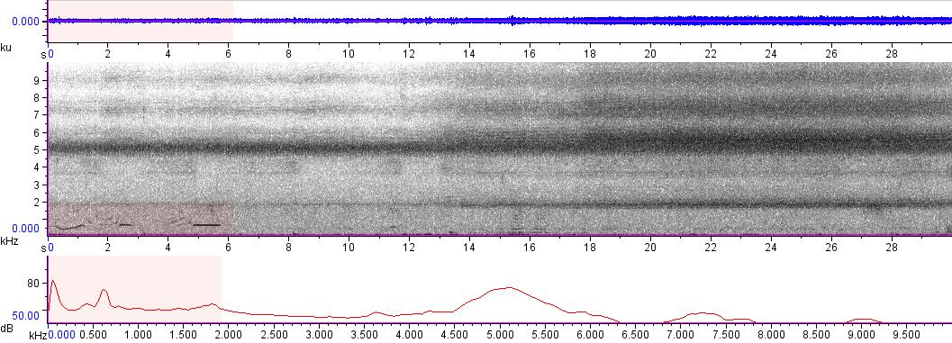 Sonogram of recording #AV 5679