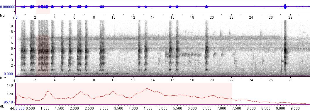 Sonogram of recording #AV 5693