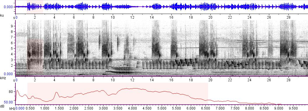 Sonogram of recording #AV 5695