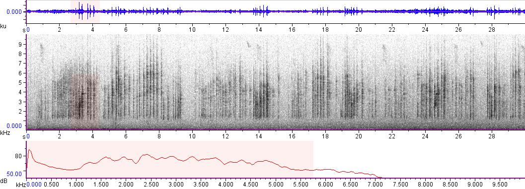 Sonogram of recording #AV 5702