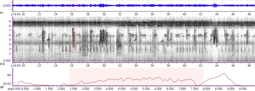 Sonogram of recording #AV 5773
