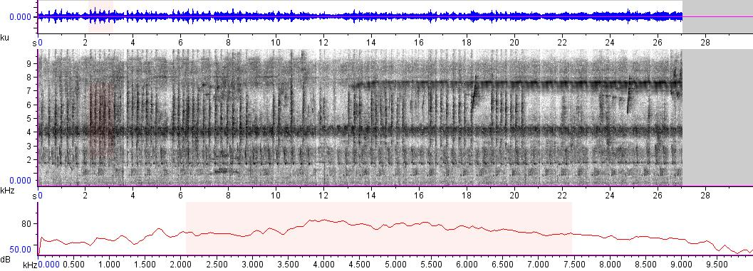 Sonogram of recording #AV 5777