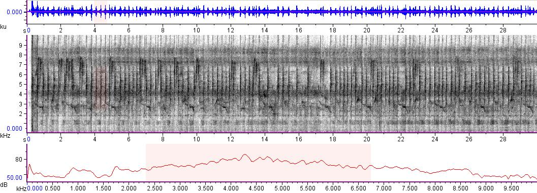 Sonogram of recording #AV 5778