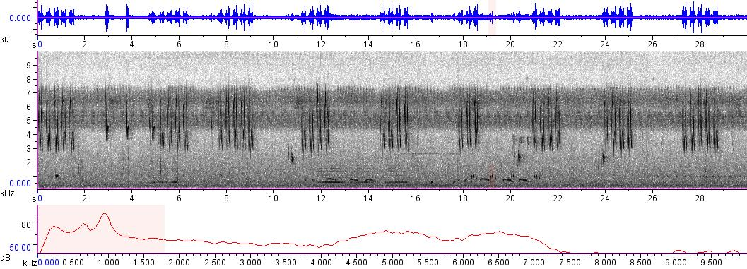 Sonogram of recording #AV 5790