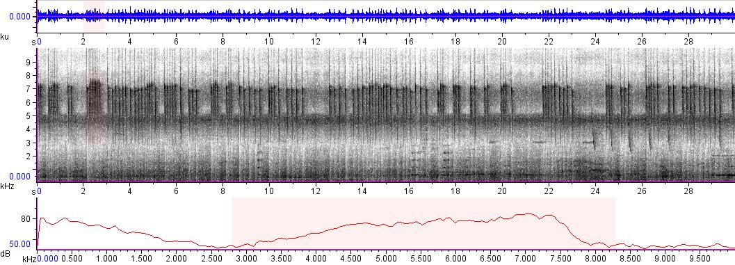 Sonogram of recording #AV 5819