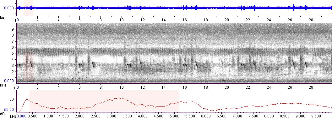 Sonogram of recording #AV 5839