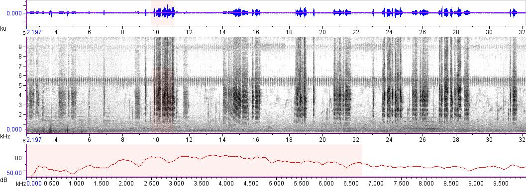 Sonogram of recording #AV 5840