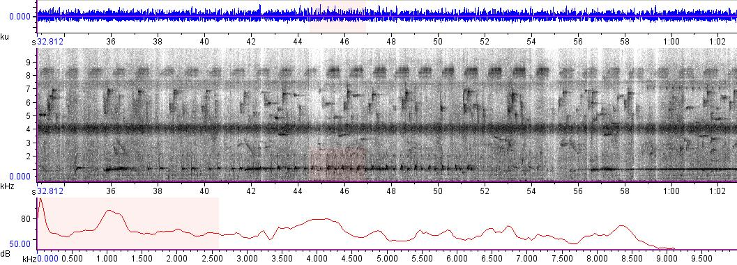 Sonogram of Glaucidium cuculoides rufescens