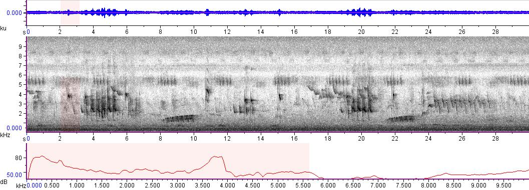 Sonogram of recording #AV 5885