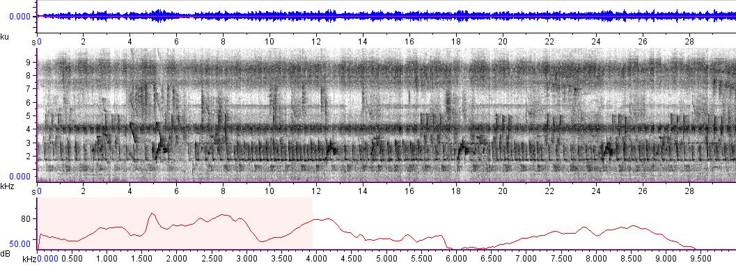 Sonogram of recording #AV 5890