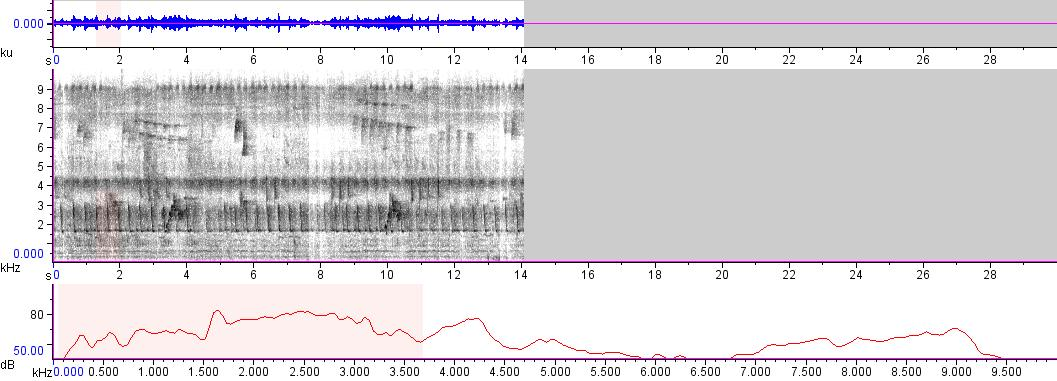 Sonogram of recording #AV 5891