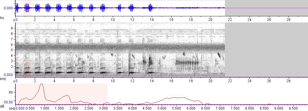Sonogram of recording #AV 5902
