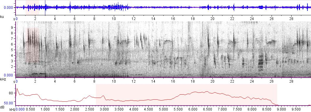 Sonogram of recording #AV 5917