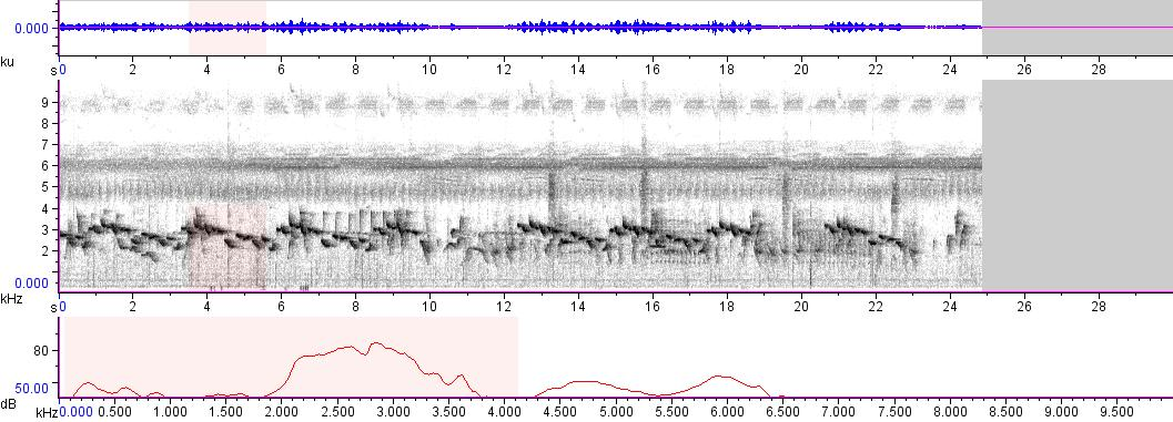 Sonogram of recording #AV 5943