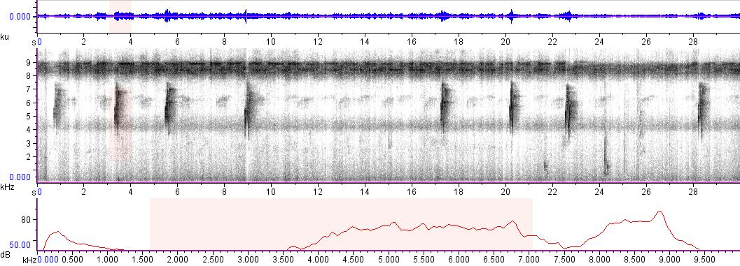 Sonogram of recording #AV 5952