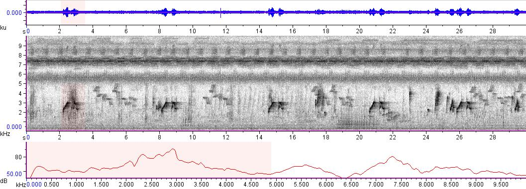 Sonogram of recording #AV 5954