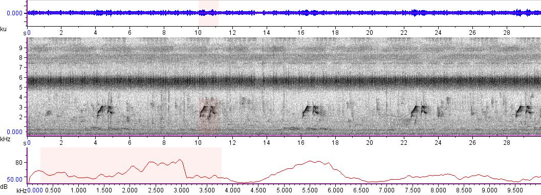 Sonogram of recording #AV 5956