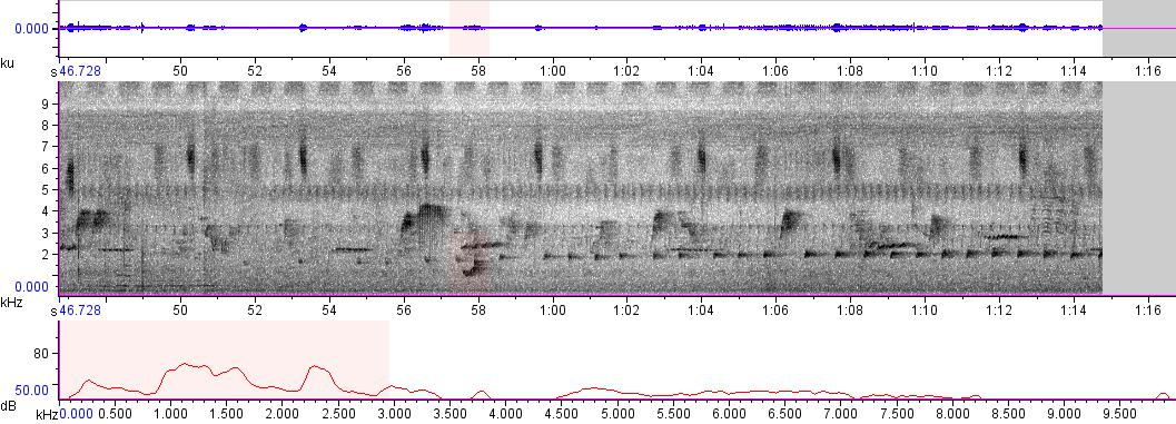 Sonogram of recording #AV 5958