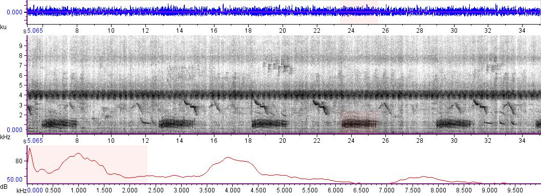 Sonogram of recording #AV 5961
