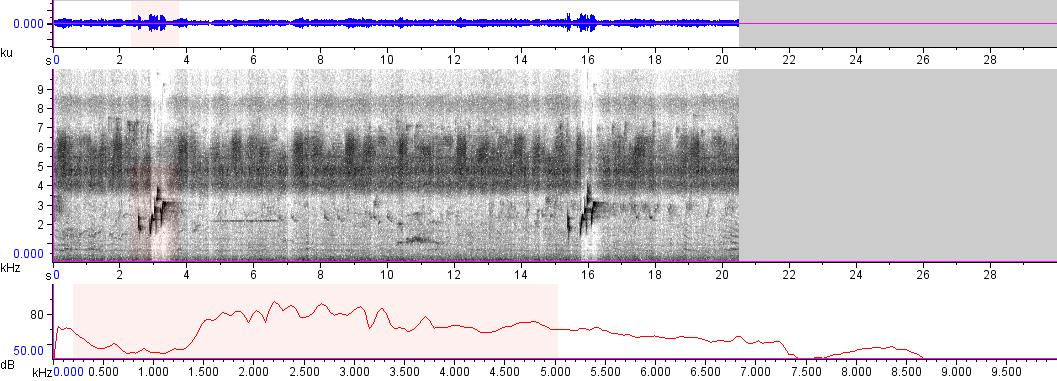 Sonogram of recording #AV 5979