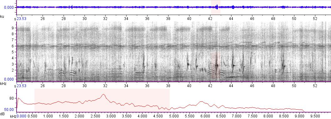 Sonogram of recording #AV 5996