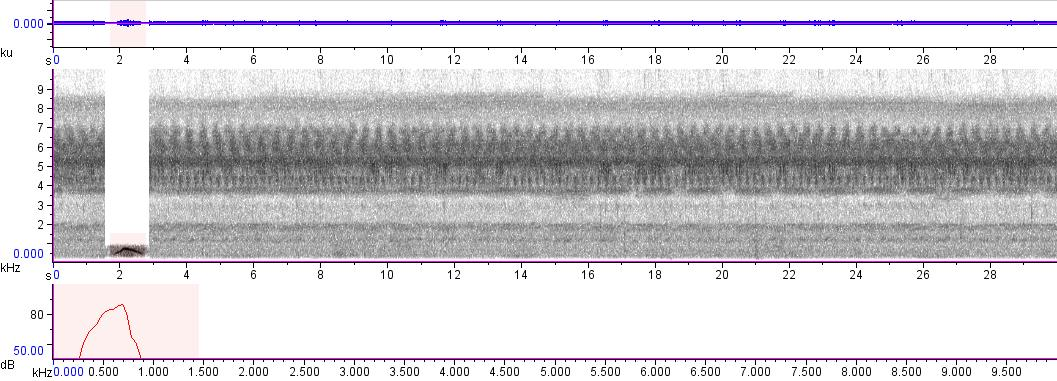 Sonogram of recording #AV 643