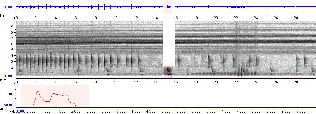 Sonogram of recording #AV 683