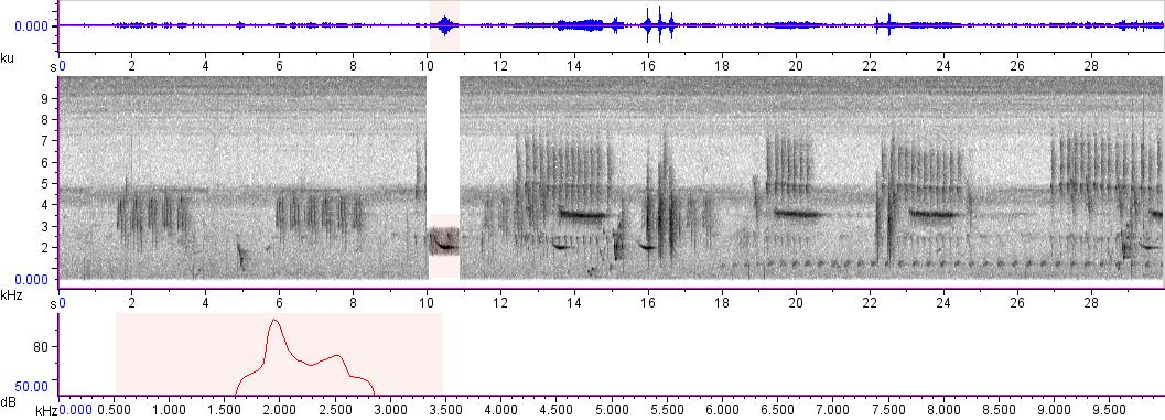 Sonogram of recording #AV 687