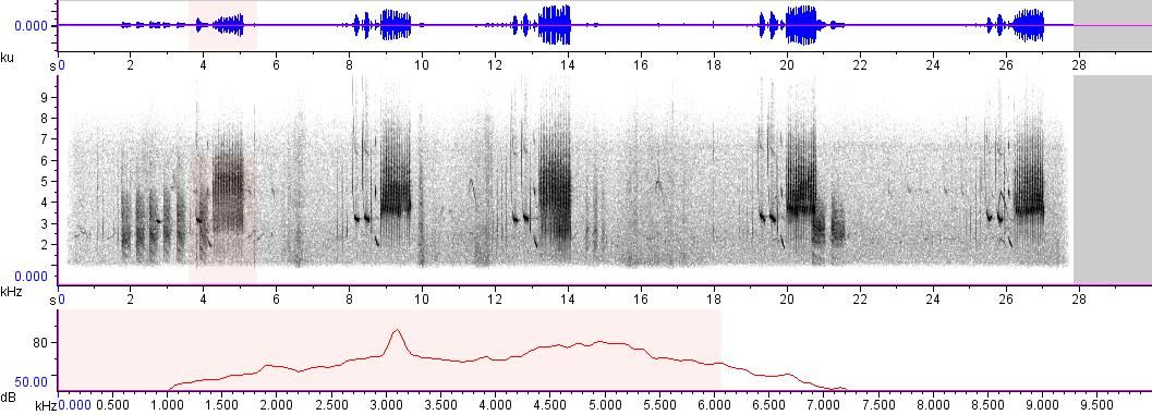 Sonogram of recording #AV 6028