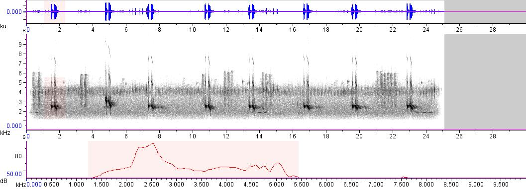 Sonogram of recording #AV 6056