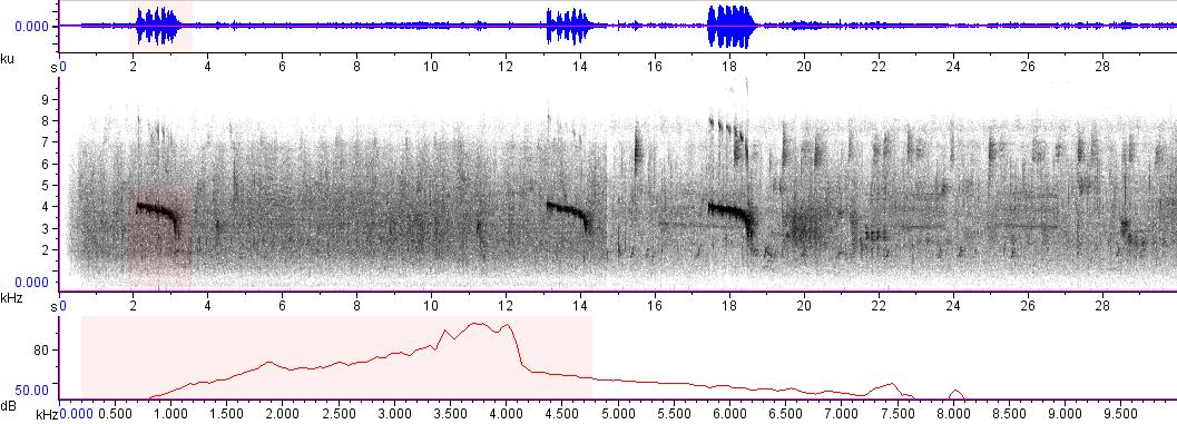 Sonogram of recording #AV 6072