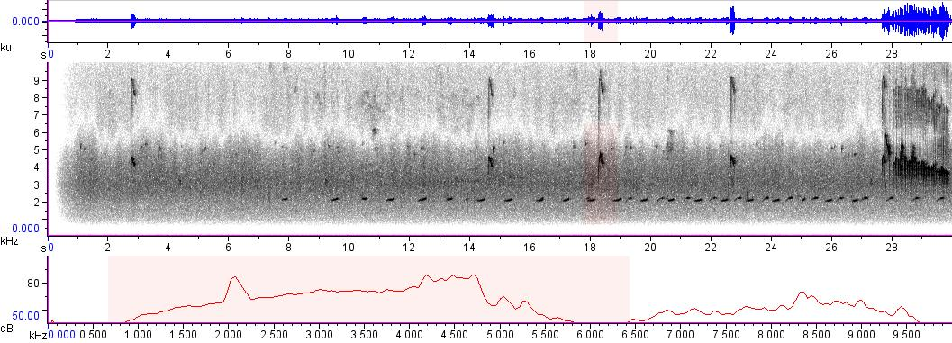 Sonogram of recording #AV 6096