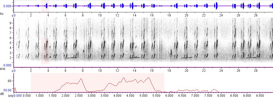 Sonogram of recording #AV 6112