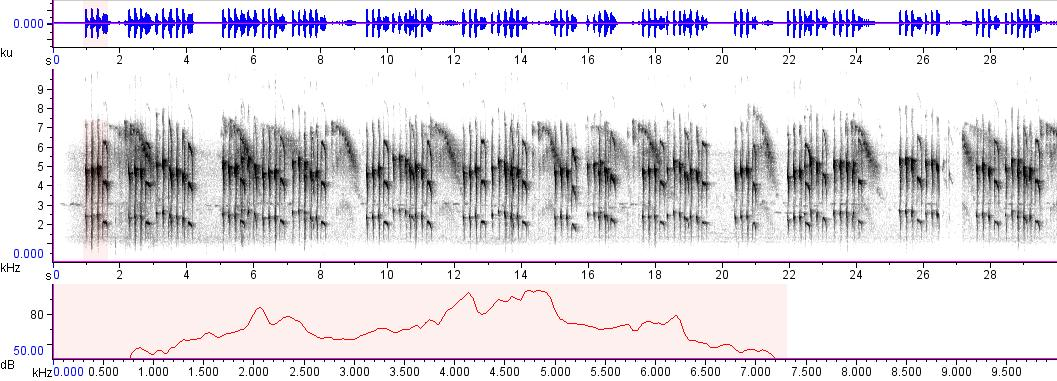 Sonogram of recording #AV 6114