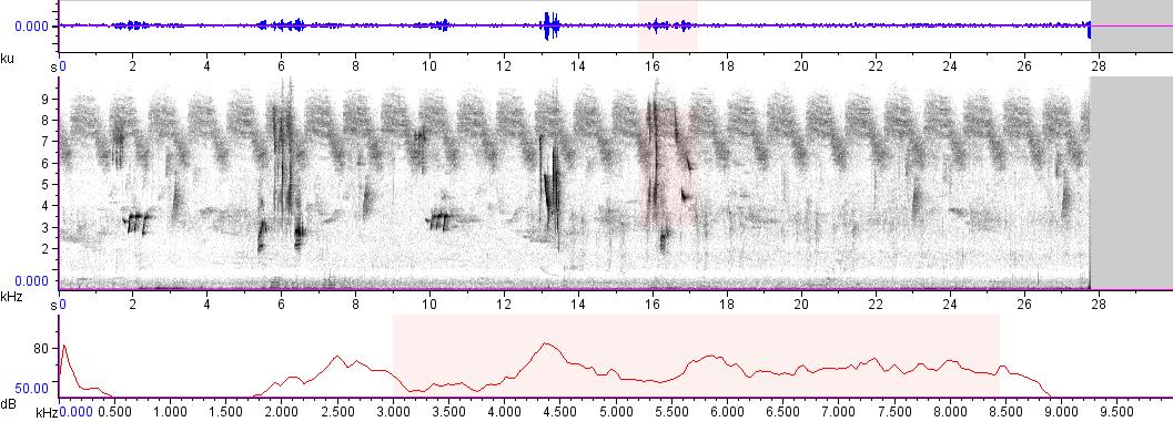 Sonogram of recording #AV 6157