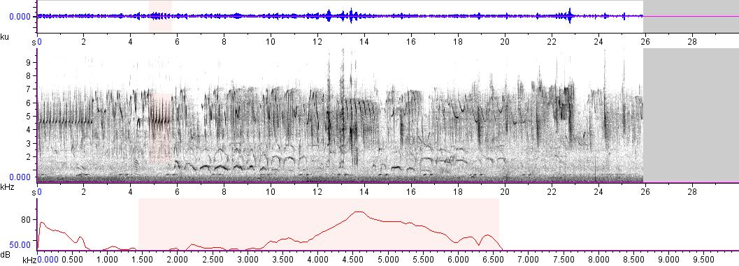 Sonogram of recording #AV 6196