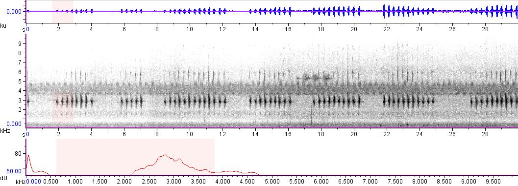 Sonogram of recording #AV 6242