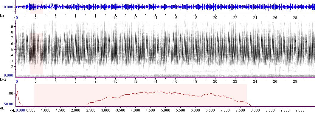 Sonogram of recording #AV 6257