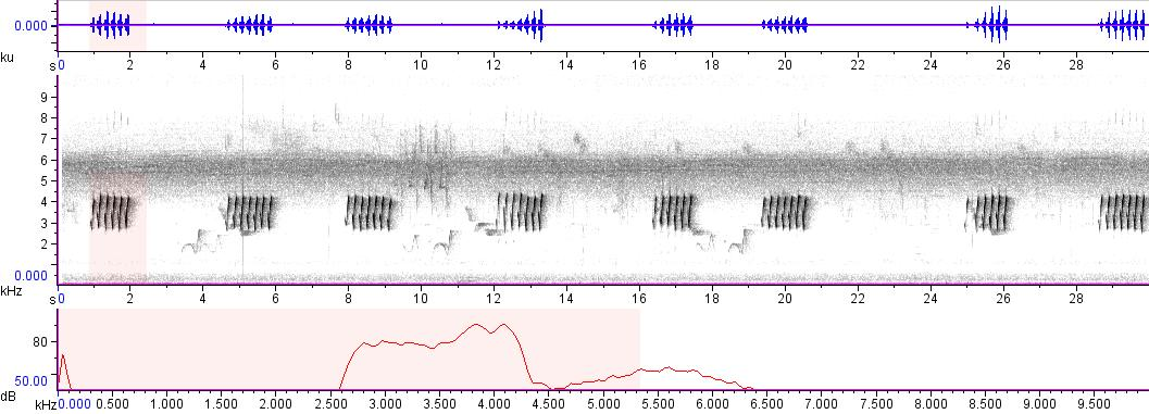 Sonogram of recording #AV 6273
