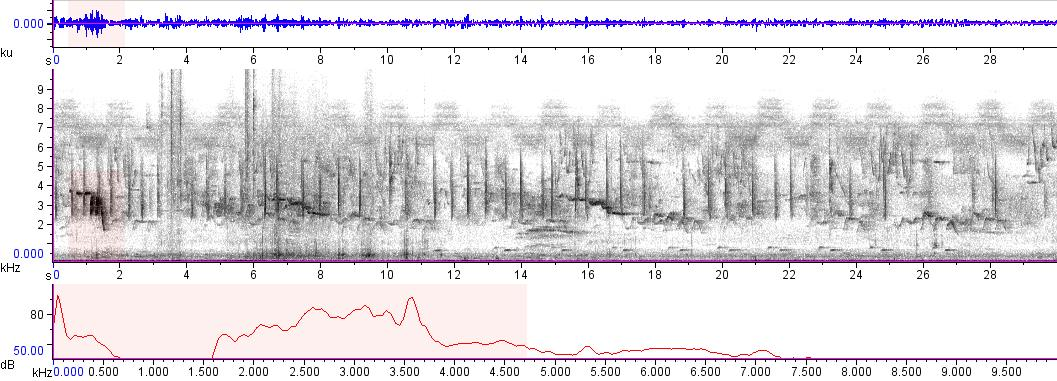 Sonogram of recording #AV 6313