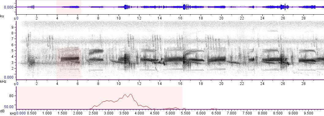 Sonogram of recording #AV 6552