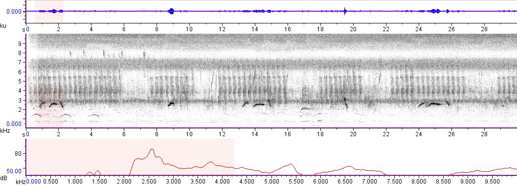 Sonogram of recording #AV 6553