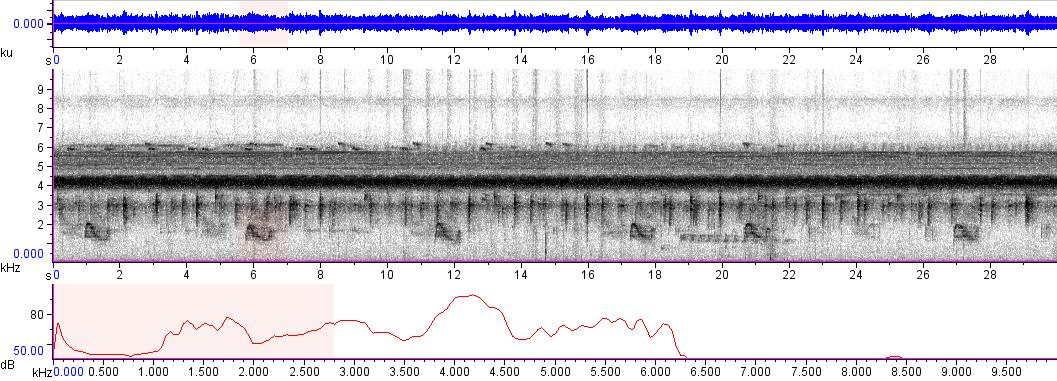 Sonogram of recording #AV 6561