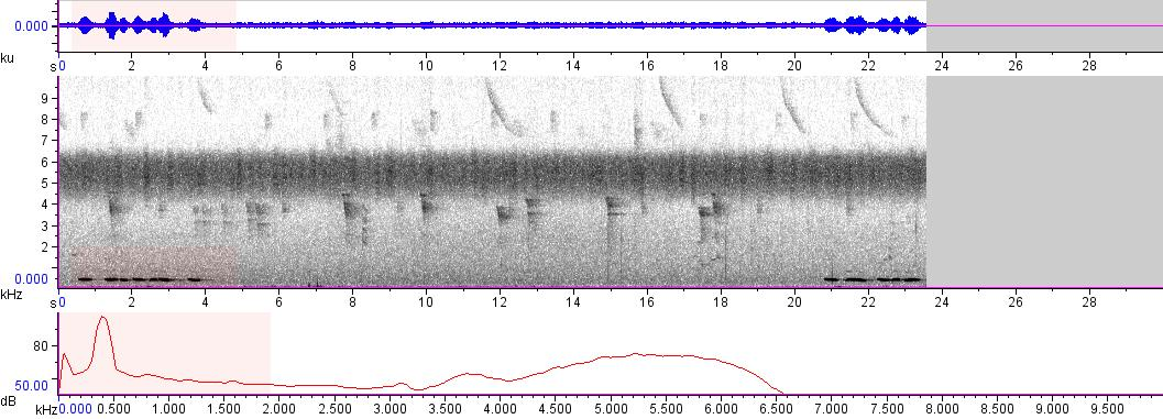 Sonogram of recording #AV 6571