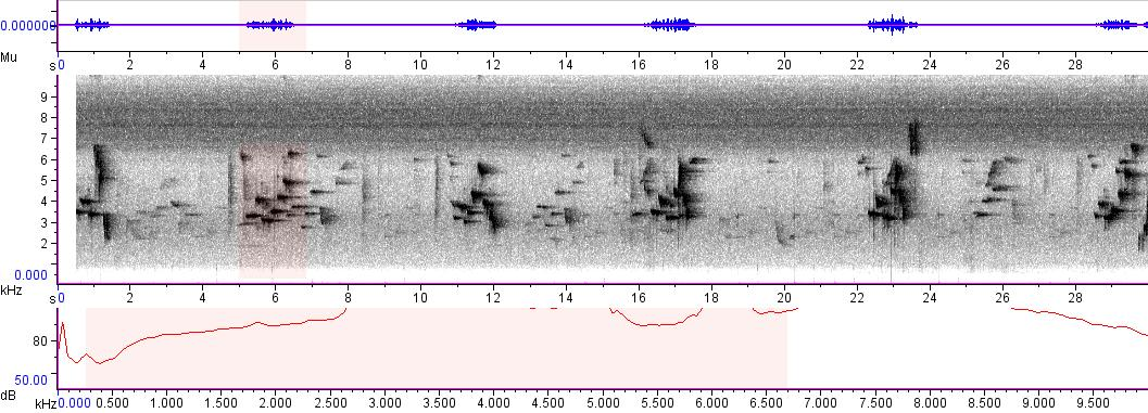 Sonogram of recording #AV 6599