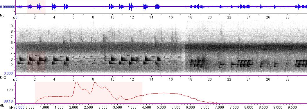 Sonogram of recording #AV 6608
