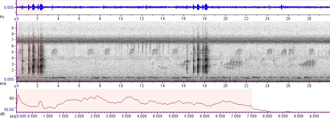 Sonogram of recording #AV 6623